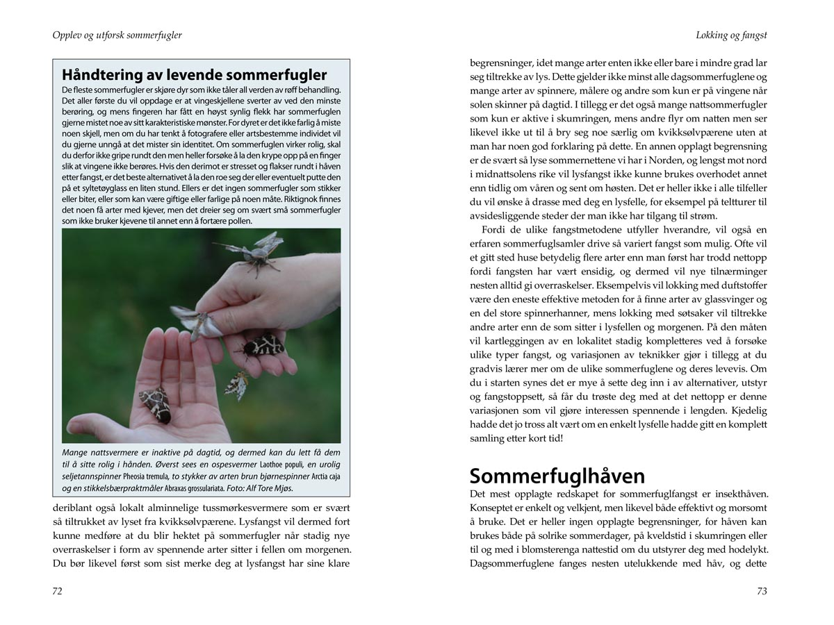 Eksempelside fra Opplev og utforsk sommerfugler