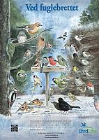 Ved fuglebrettet