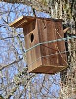 Fuglekasse kaie/perleugle