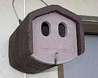 Fuglekasse for spurv