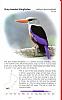 Common Birds in Oman