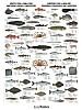 Arktiske fisk og skalldyr