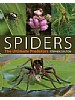 Spiders